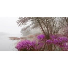 JAP838 / Cuadro Niebla en pantano