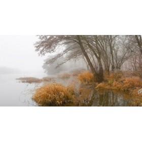 JAP836 / Cuadro Niebla en pantano