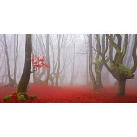 JAP828 / Cuadro Bosque hojas rojas