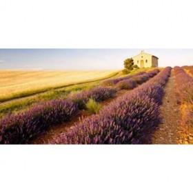 41028744(1) / Cuadro Ermita en el campo de lavanda y grano