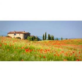 33222871 / Cuadro Rotes Italien