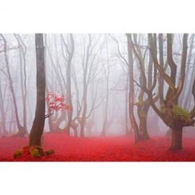 JAP 811 / Cuadro Bosque rojo