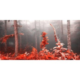 JAP 809 / Cuadro Bosque rojo