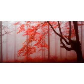JAP 807 / Cuadro Bosque rojo