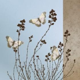 12784 / Cuadro Butterflies