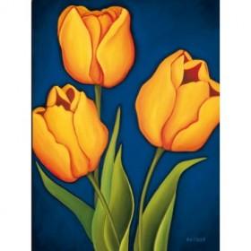 8115 / Cuadro Tulips