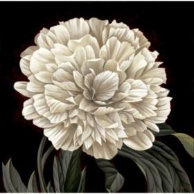 8837 / Cuadro Full Bloom II