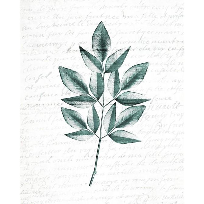 Pressed Leaves 3