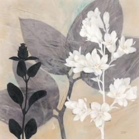 Botanical Story 1