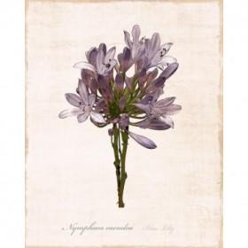 Sketchbook Lily