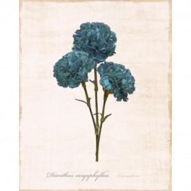 Sketchbook Carnation