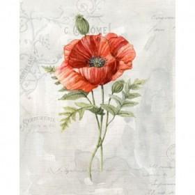 Linen Poppy