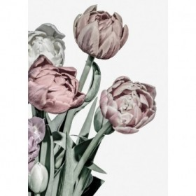 Tulips Bright