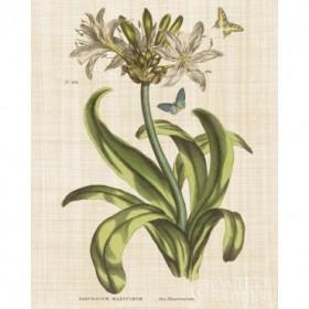 Herbal Botany XX Butterfly Linen Crop