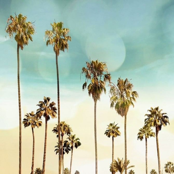 Beach Palms II