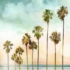 Beach Palms I