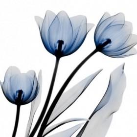 Brilliant Night Tulips C68