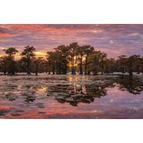 Sundown in the Swamps
