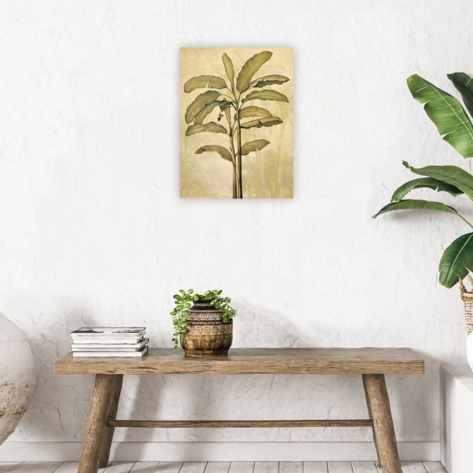 Palms of the Tropics II