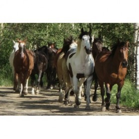 Galloping Friends