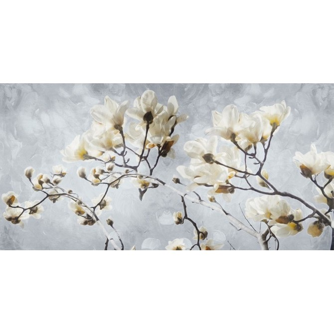 White Flowers In Grey