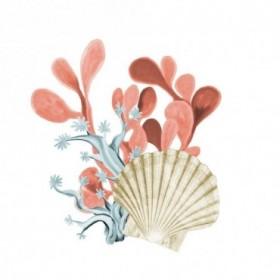 Coral Coastal 5