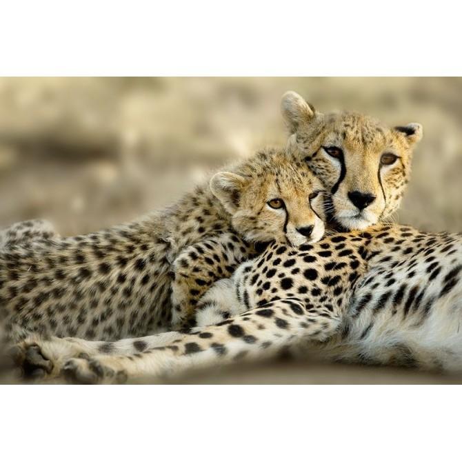 Kenya Cub