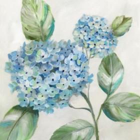 Hydrangea Beauty II