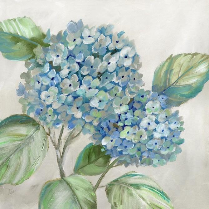 Hydrangea Beauty I