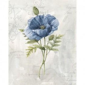 Blue Linen Poppy