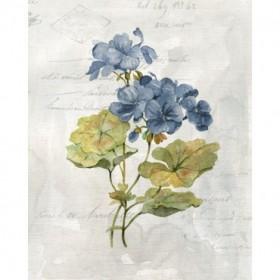 Blue Linen Geranium