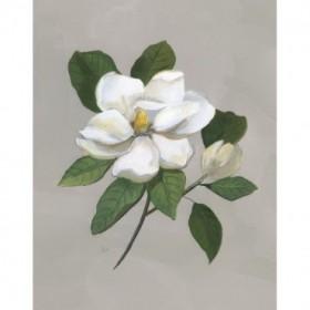 Botanical Magnolia