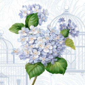 Hydrangea Cages I