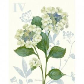 Lace Hydrangea