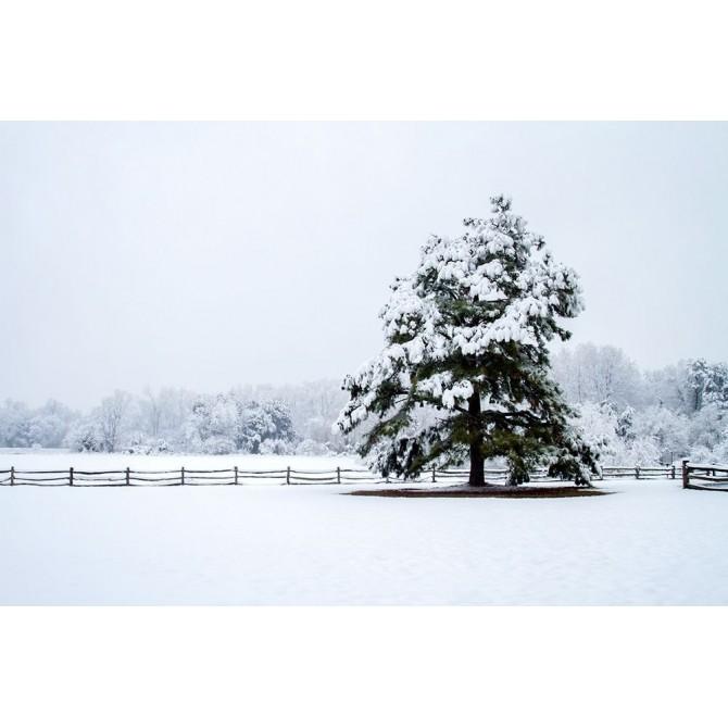 Snowy Sentinel