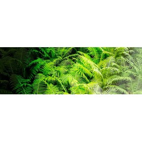 Forest Ferns II