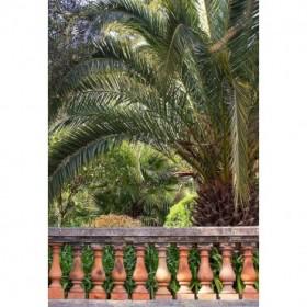 Riviera Garden Palm I