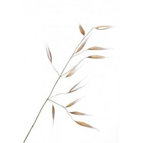 Lagandre- Subtle Delicateness