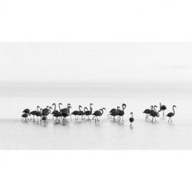 Gil Raga - Flamingos