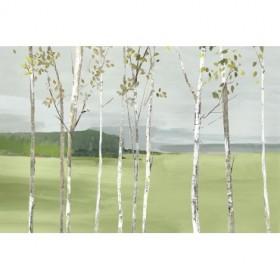 Birch Valley