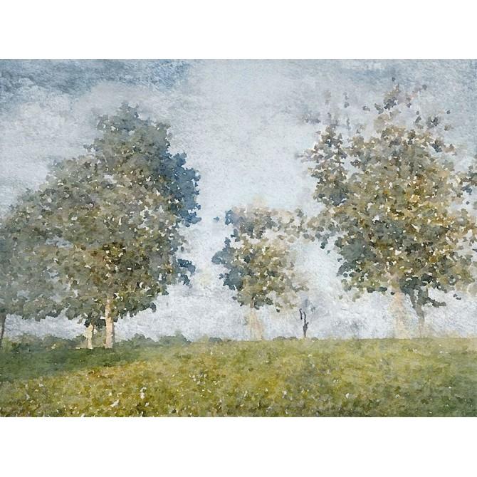 Forest Landscape I