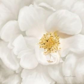 Neutral Rose No. 4