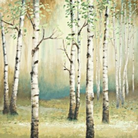 Summer Birch II