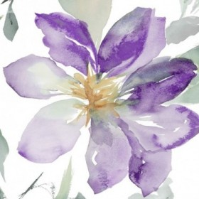 Clematis in Purple Shades II