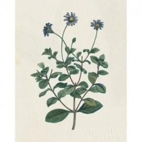 Victorian Garden Flowers IV