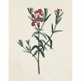 Victorian Garden Flowers II