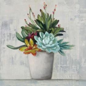 Succulent Still Life I