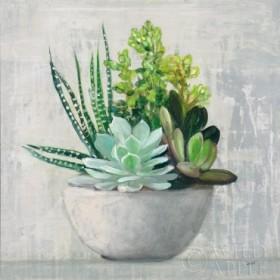 Succulent Still Life II