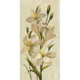 Elegant White Florals I
