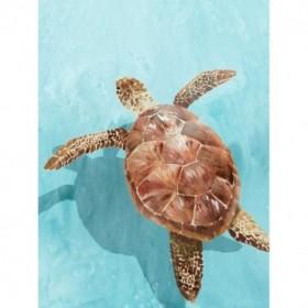 Ocean Deep Turtle II
